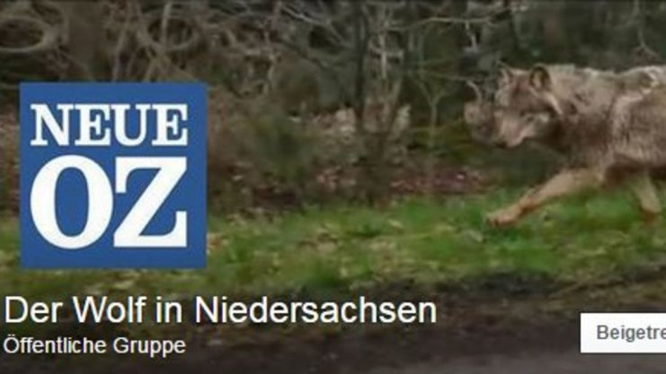 ... Der Wolf in... Noz Facebook